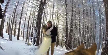 Coppia fa filmare il proprio matrimonio al cane - VIDEO