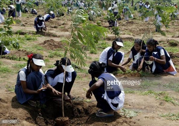 India-pianta-50-milioni-alberi-5