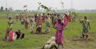 India-pianta-50-milioni-alberi-