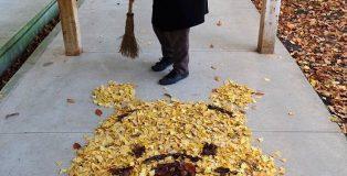 giappone-foglie-foto-0