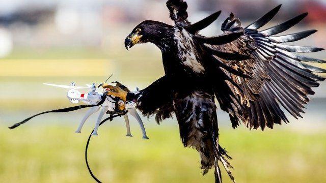 aquila-vs-drone-francia
