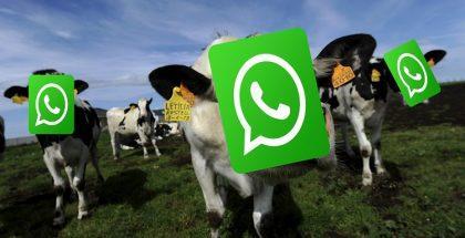 monetizzare-Whatsapp